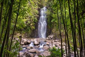 Bamboo Waterfalls